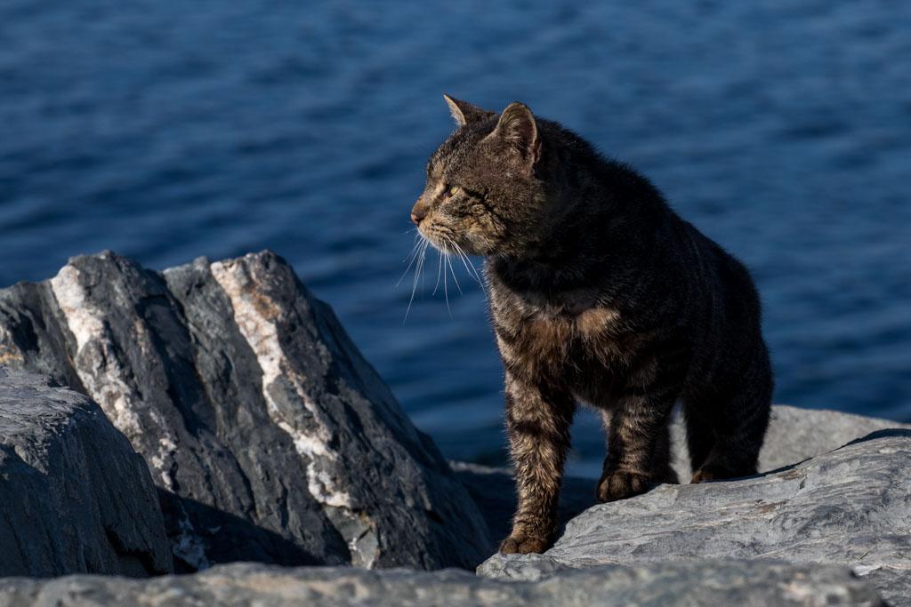 Istanbul Stray Cat