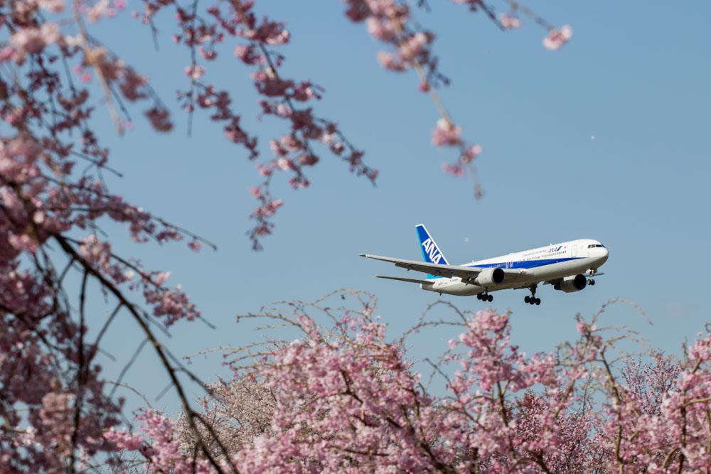 ANA 767 Landing
