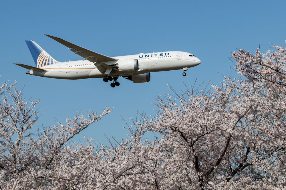 United 787 with Sakura Trees
