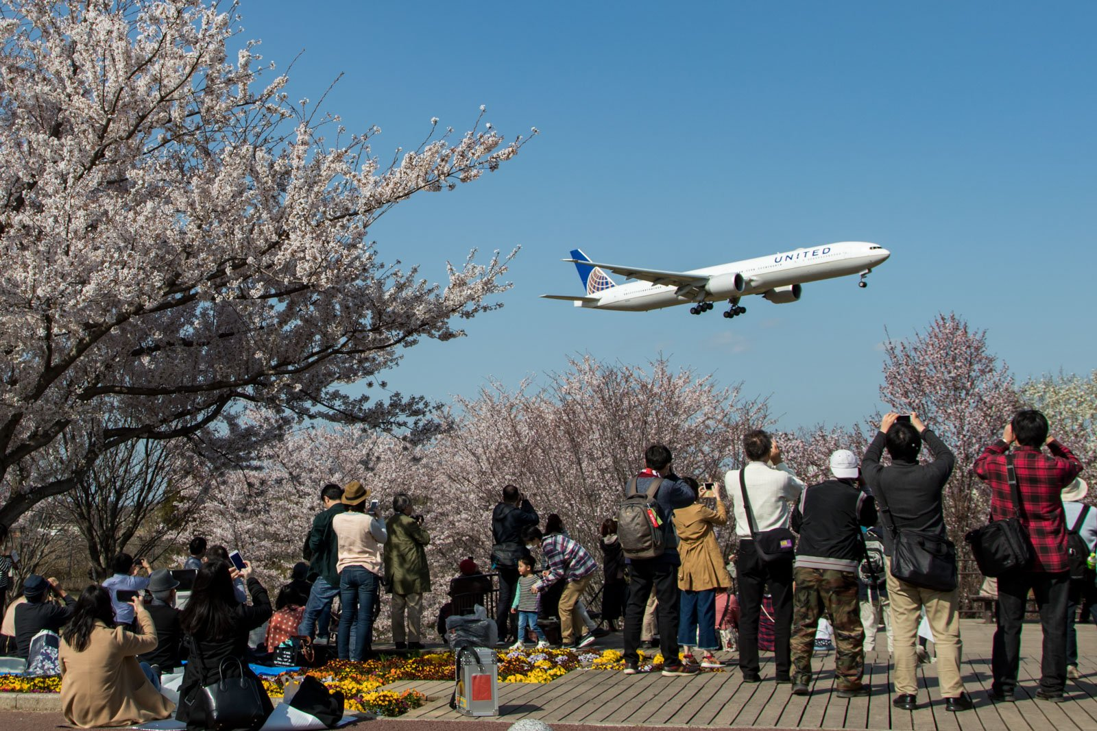 United 787 Landing from Sakura no Yama Park