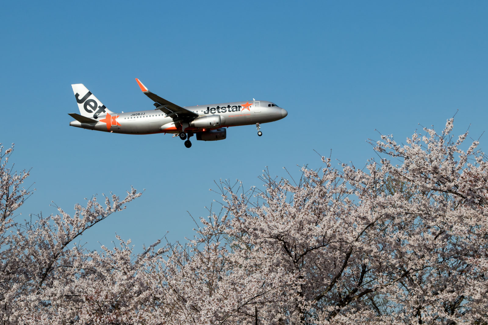 Jetstar A320 with Sakura