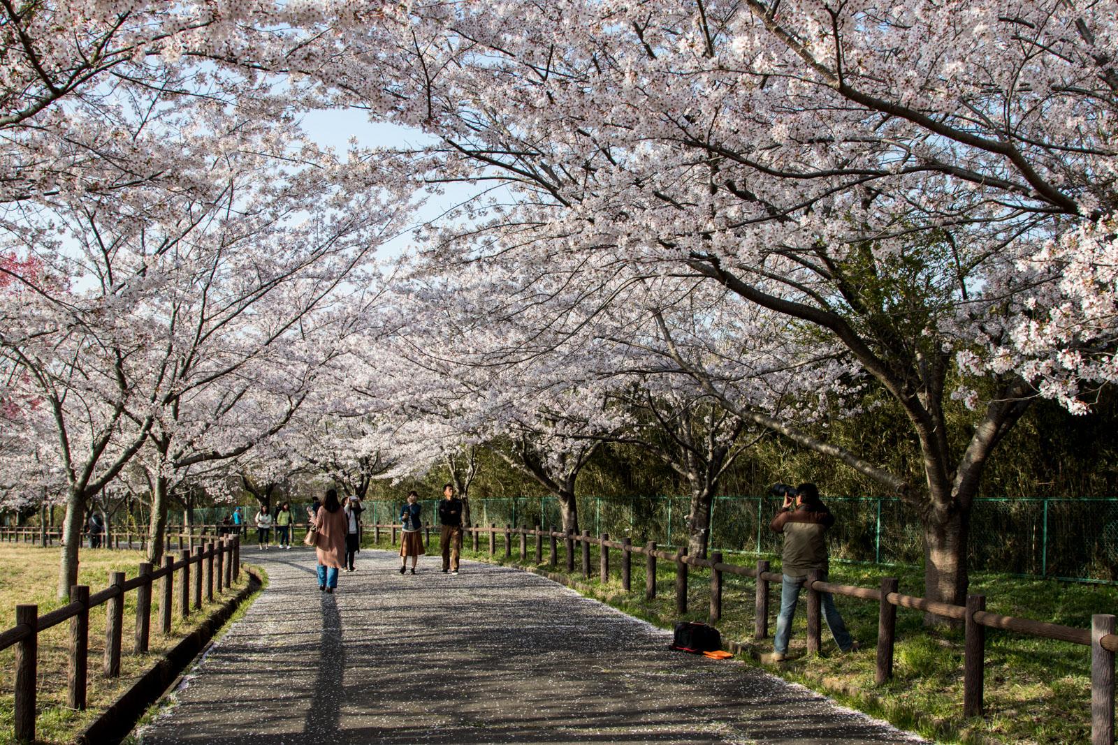 Sakura no Yama Park
