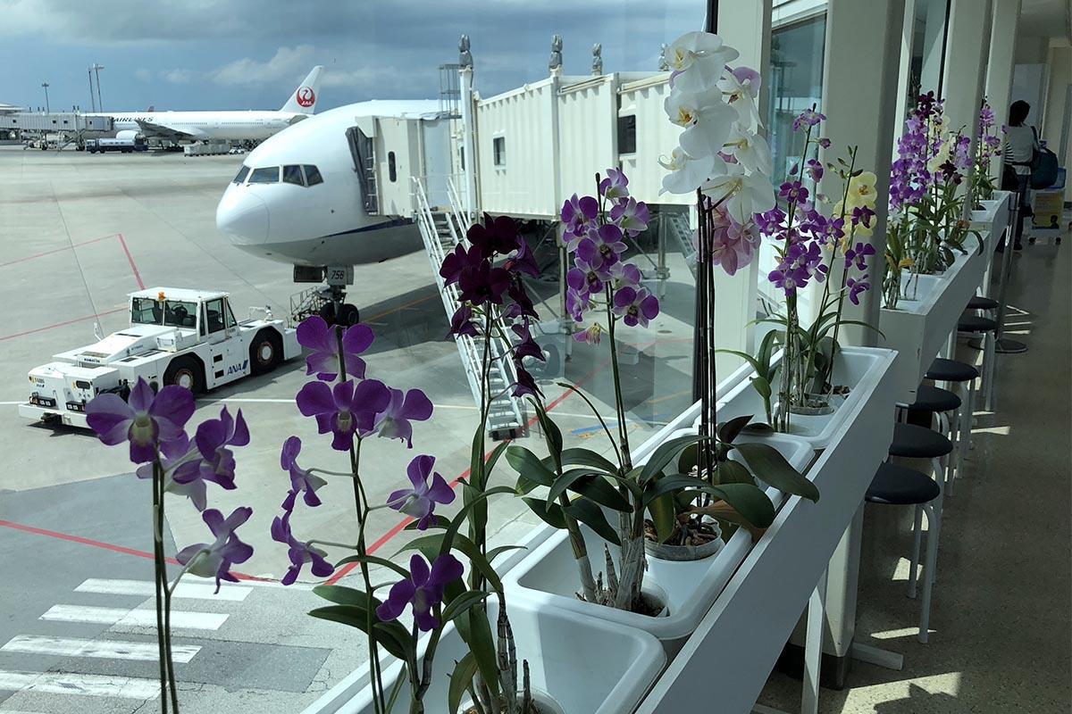 ANA 777 at Naha Airport