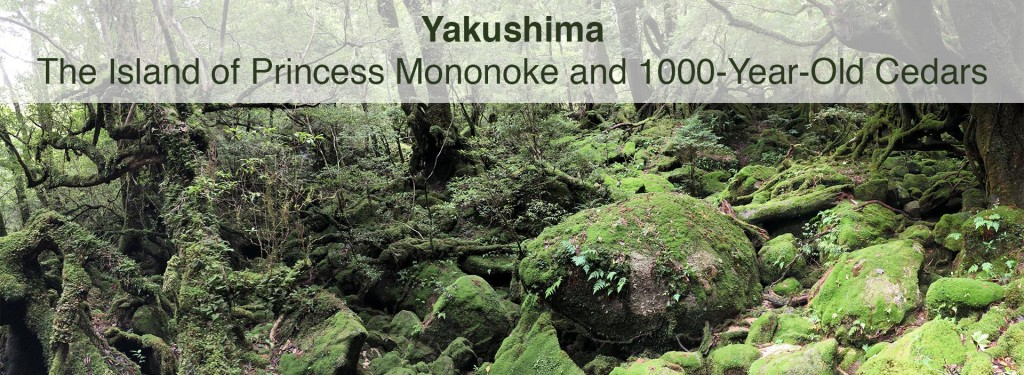 Yakushima: The Island of Princess Mononoke and 1000-Year-Old Cedars