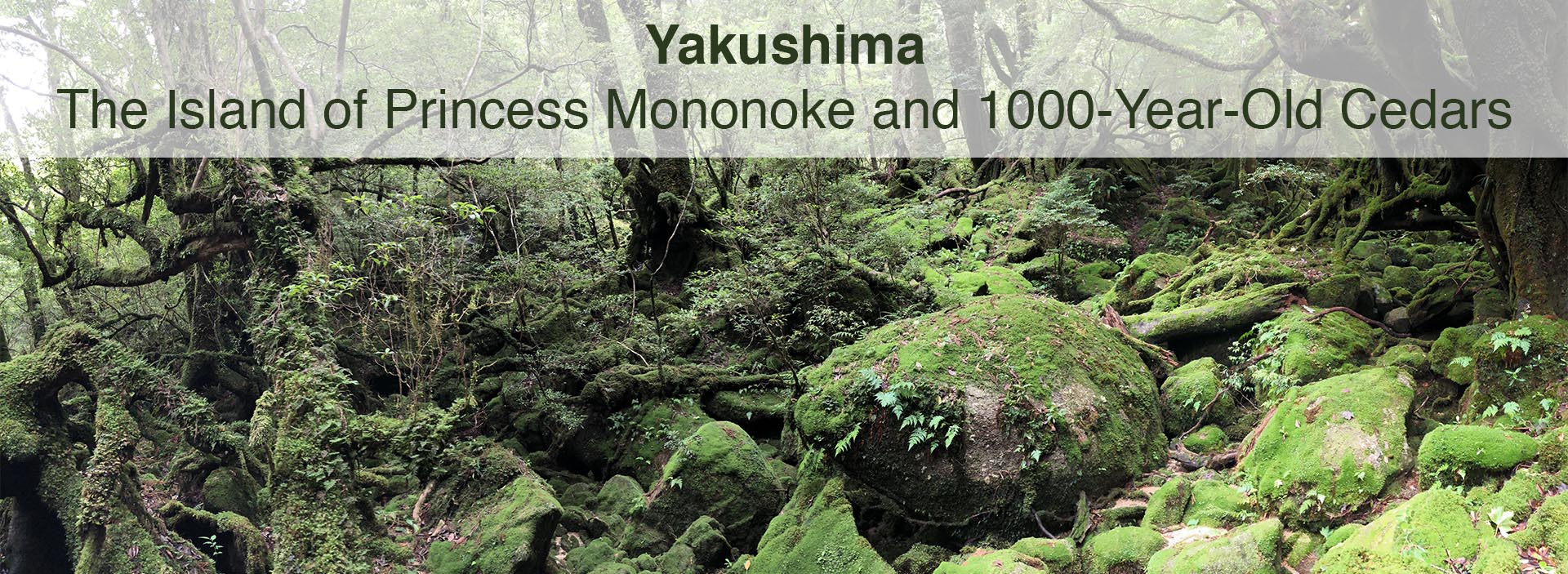 Yakushima: The Island of Princess Mononoke and 1000-Year-Old Cedars
