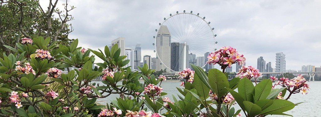 Trip Preview: A Quick 24-Hour Visit to Singapore